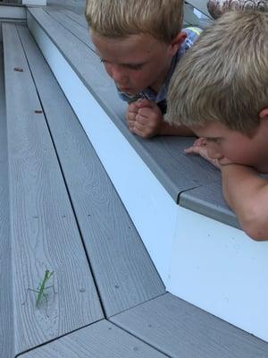 children praying mantis