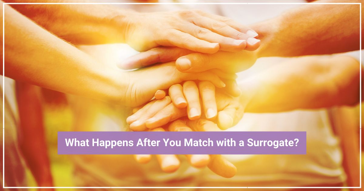gay surrogacy matching process
